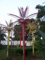 Barevne palmicky