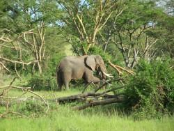 Slon :-D