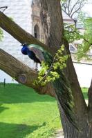 Náhled alba: Pernikove slavnosti v Pardubicich